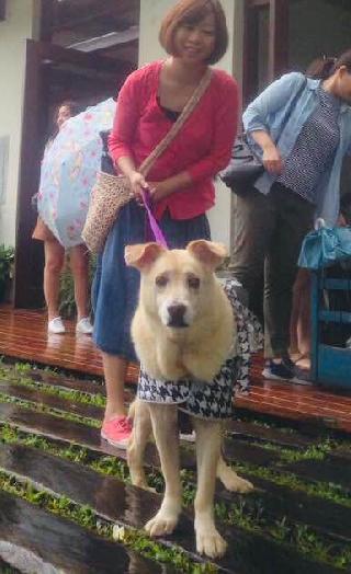 Yiching, Pet Boarder in 高雄市