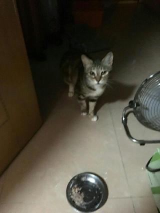 Yan, Pet Sitter in Huddige