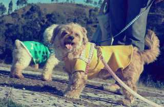 Yay, Pet Vet in Rio de Janeiro