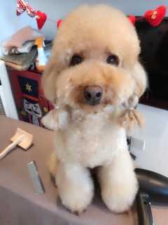 Echo, Pet Boarder in Tanjong Katong