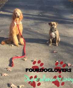 Fourdoglovers