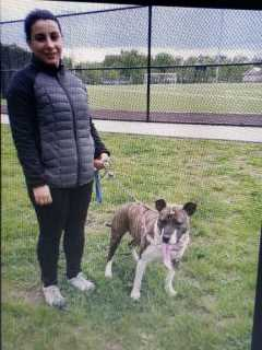 Edania, Pet Walker in Ridgefield
