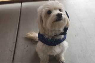 Nonnie, Pet Boarder in Las Vegas