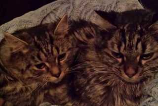 Noha, Pet Sitter in Montreal