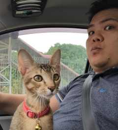Louis, Pet Boarder in Subang Jaya