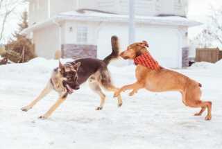 Need A Dog Walker?