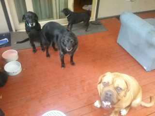 Jessica, Pet Sitter in Endeavour Hills