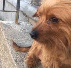 Yaritza, Pet Sitter in Gloucester City