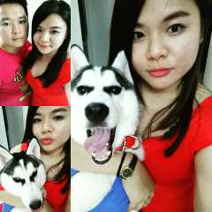 Bei, Pet Sitter in George Town