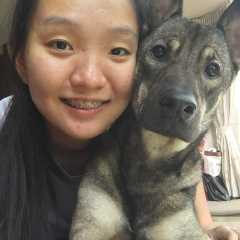 Daphne, Pet Walker in Boon Lay
