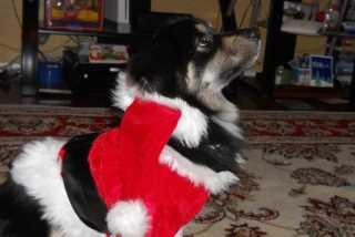Angie, Pet Boarder in Willingboro