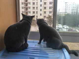 Vanessa, Pet Sitter in 上海