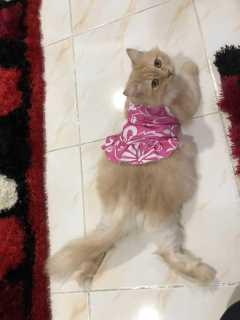 Adawiah, Pet Boarder in Ampang
