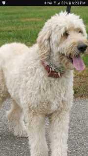 Niteesh, Pet Sitter in Markham