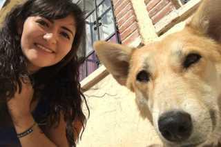 Cynthia, Pet Sitter in Wudaokou