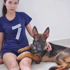 Maple, Pet Boarder in Bukit Mertajam