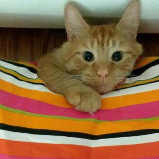 Burgandy, Pet Sitter in Lansing