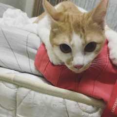 Amelisa, Pet Boarder in Subang Jaya
