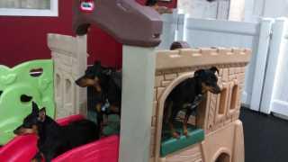 Clari, Pet Walker in New York