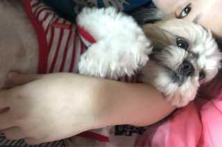 Sharyn, Pet Sitter in Serdang