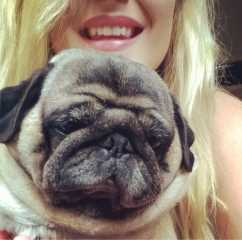 Carli's Dog Walking Service