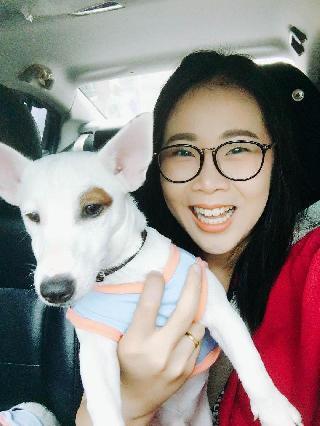 Phaniepoo, Pet Sitter in Bangkok