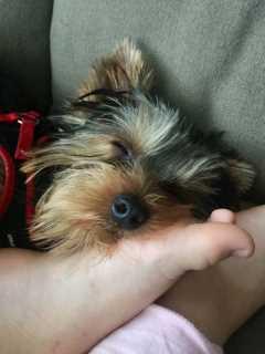 Irasema, Pet Sitter in Tallahassee