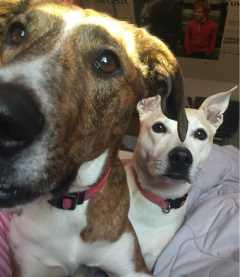 Sumona, Pet Walker in Hamilton