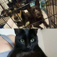 khari, Pet Sitter in San José