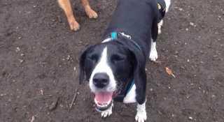 Maria Pet Care And Dog Walking