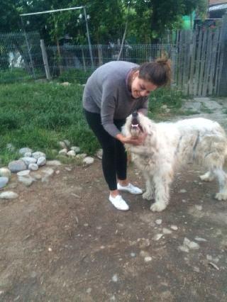 Eliza Dog Walking