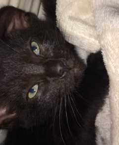 Shawna, Pet Sitter in Woking GU22