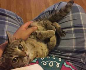 Debora Pet Sitter