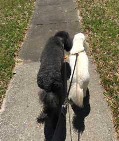 Madison's Dog Walking