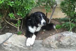 Jody, Pet Boarder in Strathfield