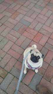 Elisabeth, Pet Boarder in Massachusetts