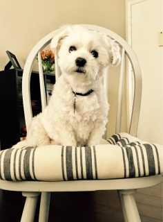 Anissa, Pet Boarder in Los Angeles
