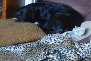 Astrid, Pet Boarder in Somerton Park