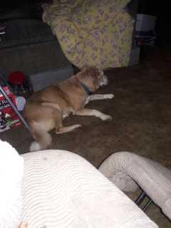 Jennifer, Pet Walker in Fort Smith