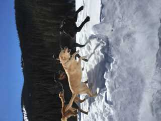 Kelly, Pet Sitter in Breckenridge