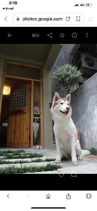桑, Pet Boarder in 左營區