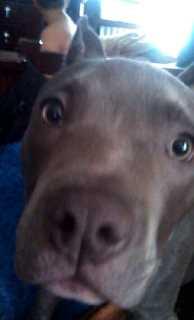 Dylan Dog Care