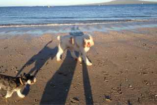 Birkdale Jamie Pet Walking