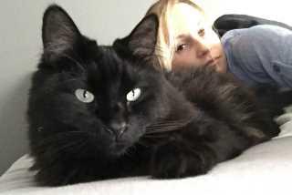 Cat, Pet Sitter in Santa Monica