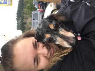 Maisie, Pet Walker in Everett