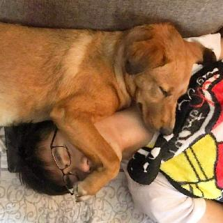 Mike, Pet Sitter in Sai Kung