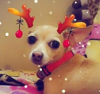Pet Boarding in Austin Texas, South Austin | Shelby's FurryFun Dog Boarding  | PetBacker Home Pet Hotel