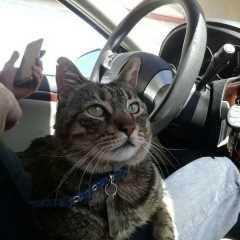 Kat, Pet Sitter in Anaheim