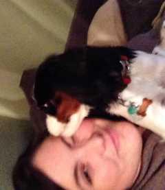 Maggie, Pet Boarder in Moorestown