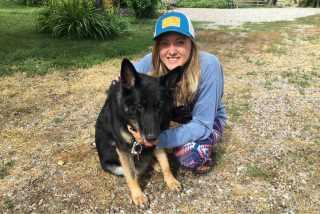 Allison, Pet Boarder in Louisville